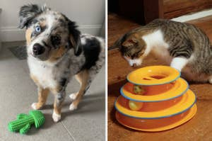 cactus shaped toy and dog on the left and cat with a towered trackball toy on the right