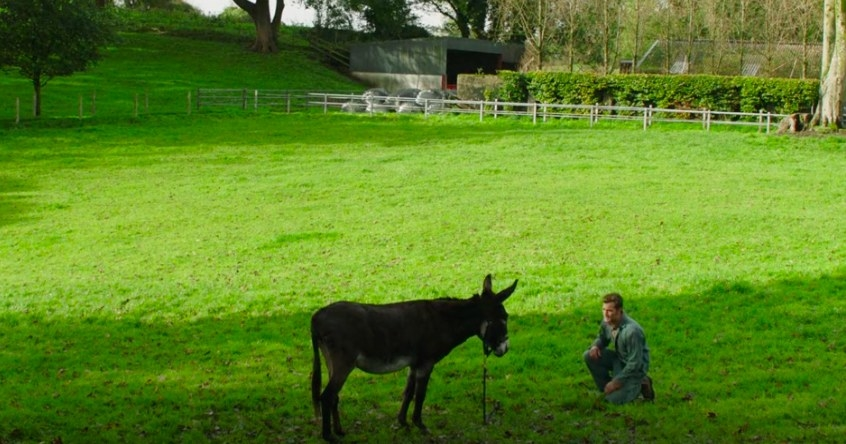 Anthony kneeling in front of a donkey in a field