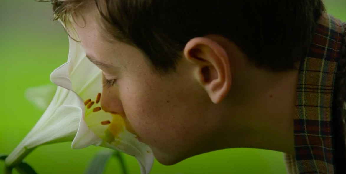 A small boy leaning into a flower to smell it.