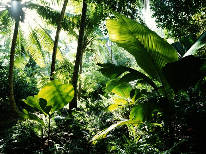 A rainforest