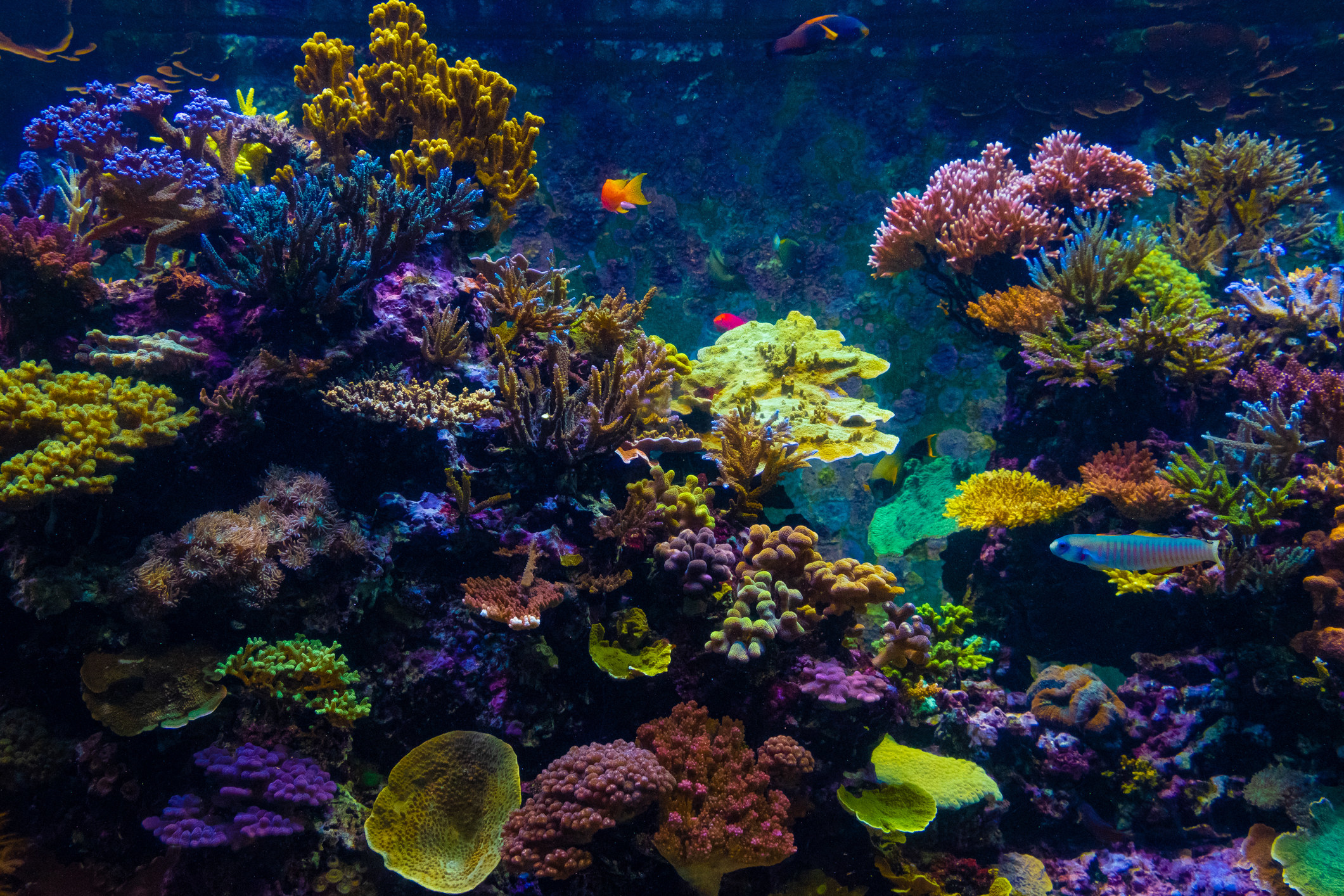 A colorful area of the Great Barrier Reef