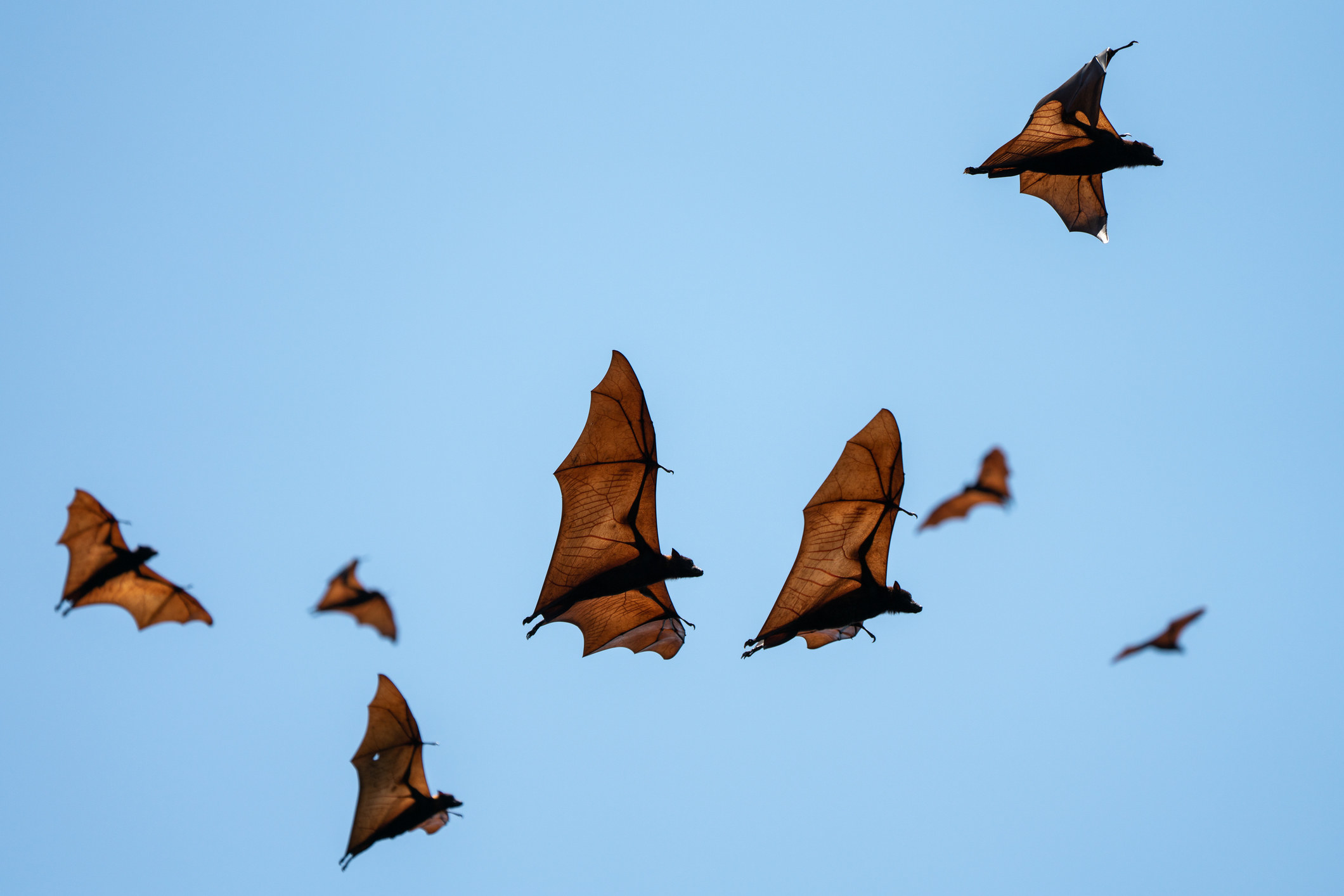 A group of bats flying
