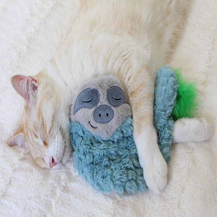 A kitten cuddling the teal sloth version