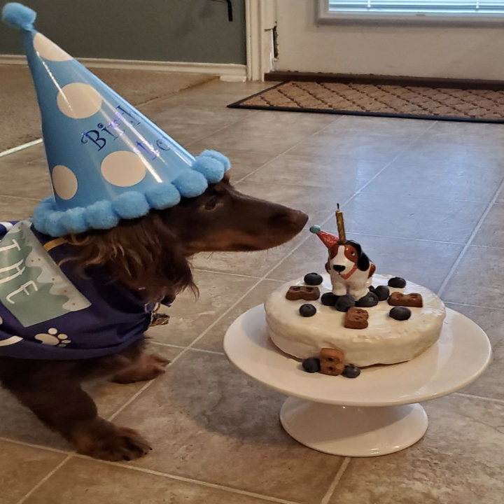 reviewer photo of dachshund eating cake