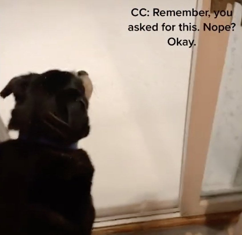 A dogs looks out his door at all the snow outside