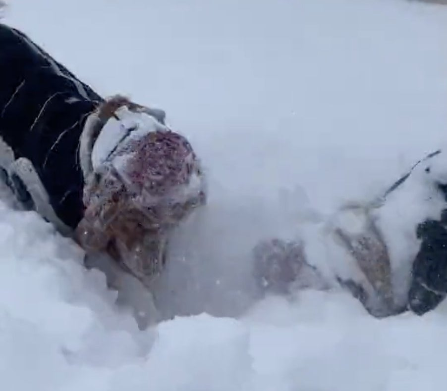 Two dogs wearing knitted hats dig in the snow