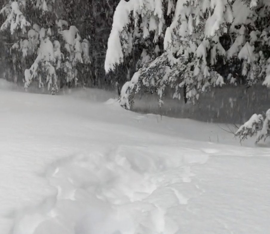 A dog is completely hidden by snow