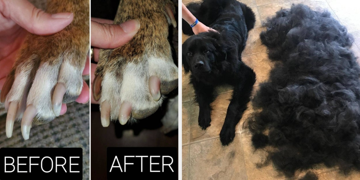 Image of article '29 Pet Products On Amazon With Before-And-Afters That Prove How Well They Work'