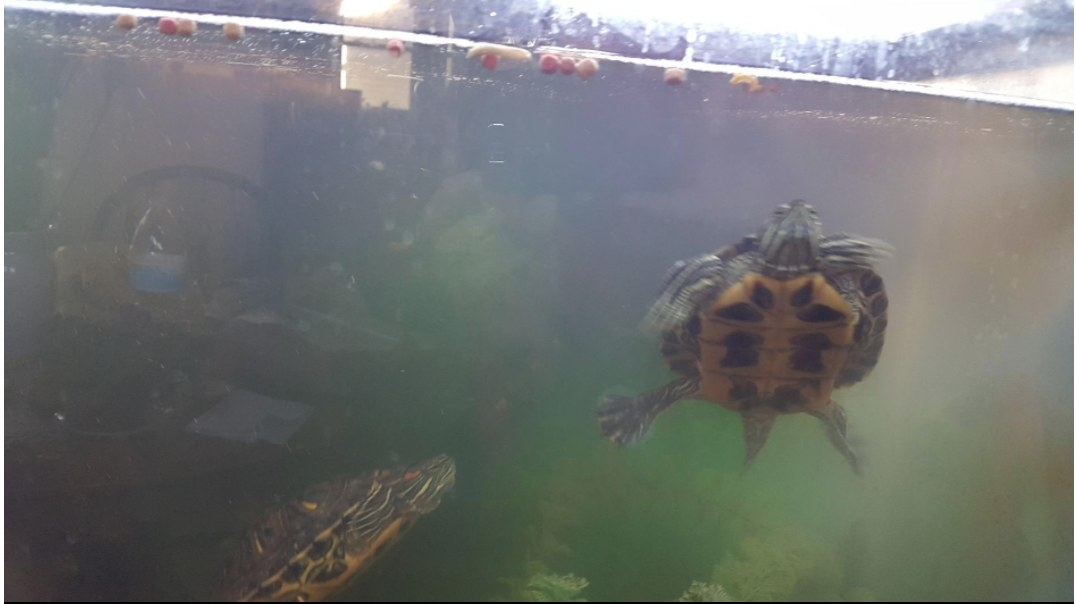 A reviewers turtles enjoying the food