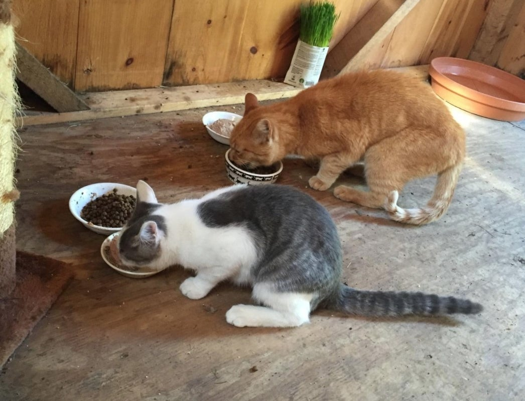 a reviewers two cats eating the food