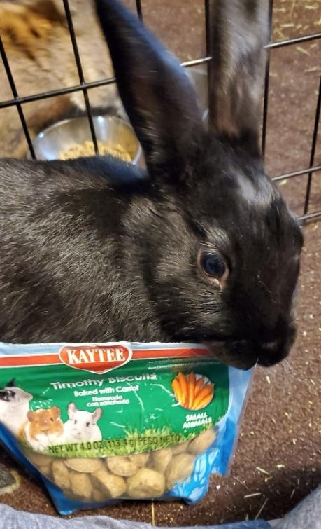 a reviewer's bunny with the treats