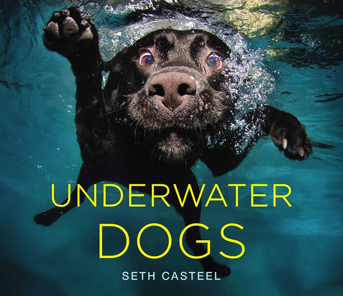 cover of Underwater Dogs