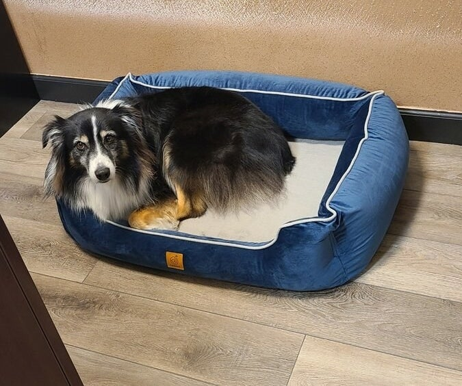 The blue dog bolster bed