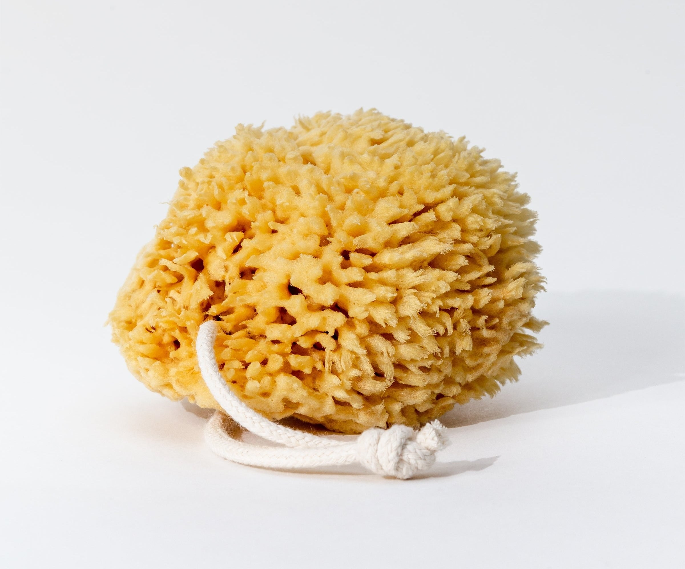 The natural sea sponge which has a rope so it can be hung to dry