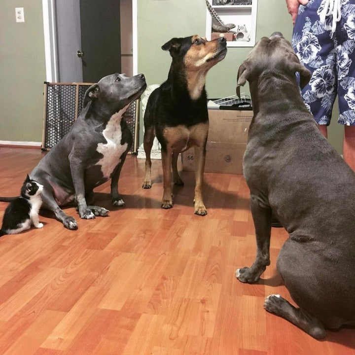 Reviewer Photos: Dogs