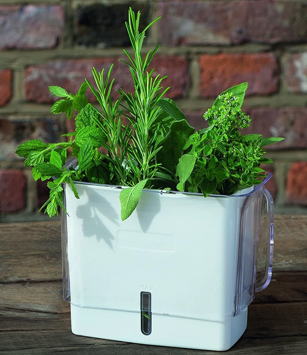 A container with fresh herbs inside