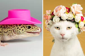 A side-by-side image of a lizard in a pink cowboy hat and a white cat wearing a flower crown