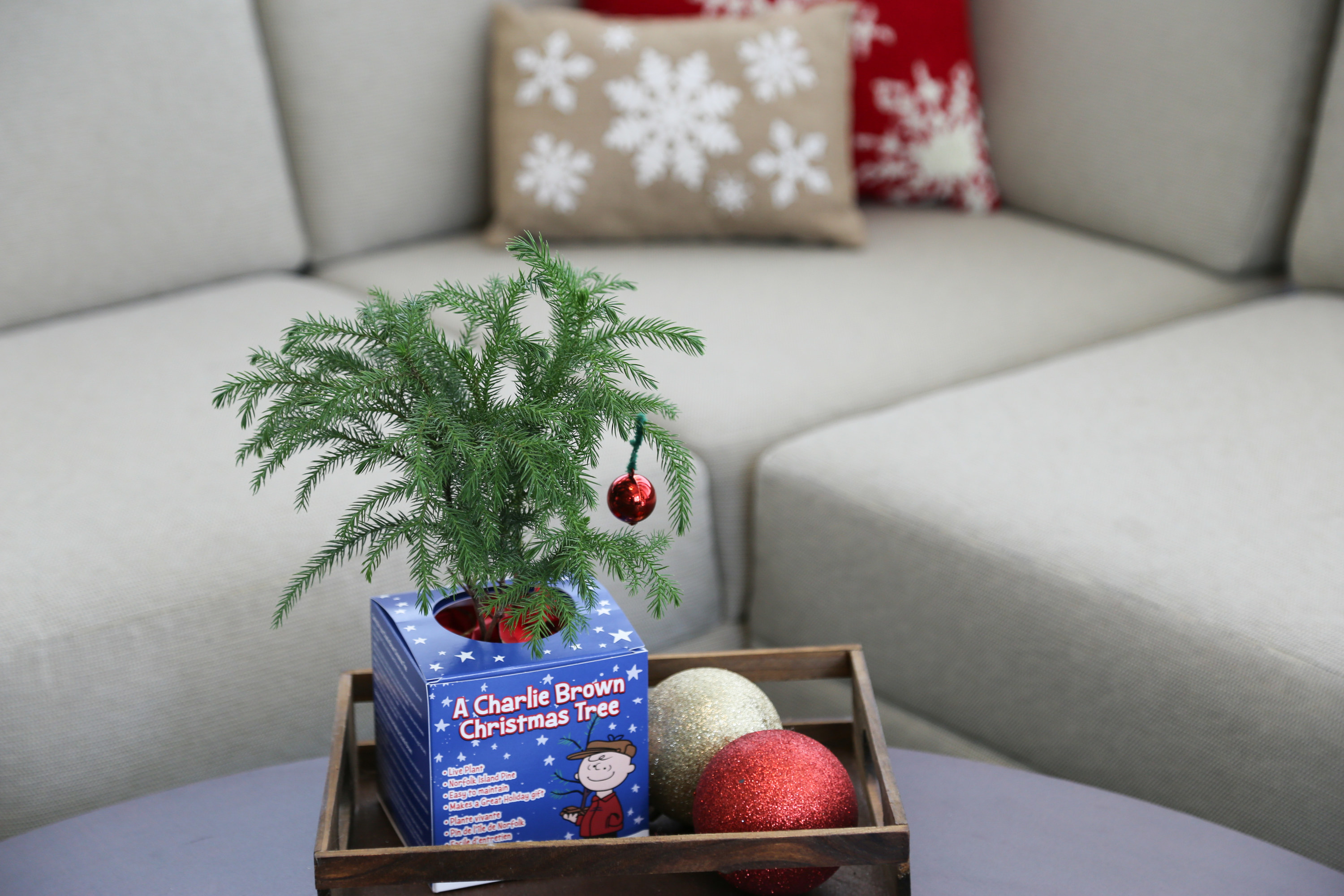 The small tree in a living room
