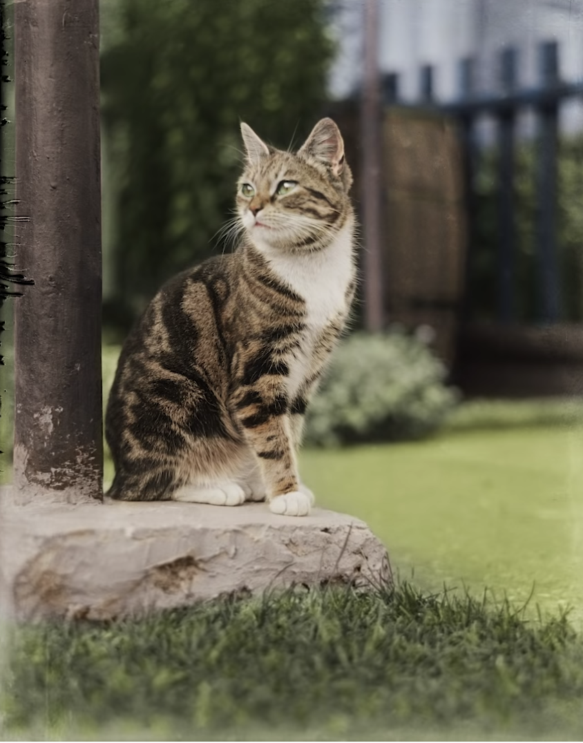 A colorized photo from the 19th century of a cute cat