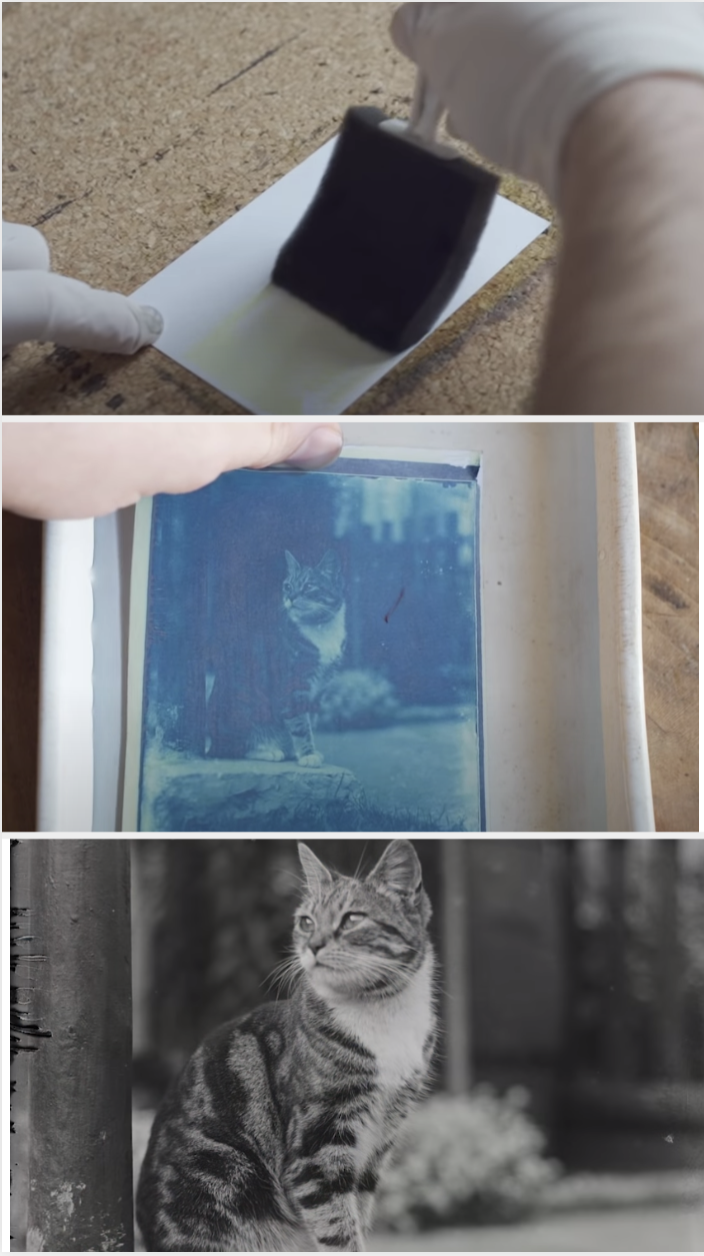 A man wiping something onto a negative and slowly developing photo of a cat