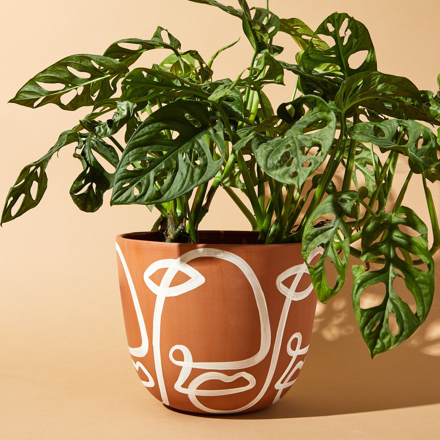The terracotta pot with white painted face-like images all around and a plant growing out of it