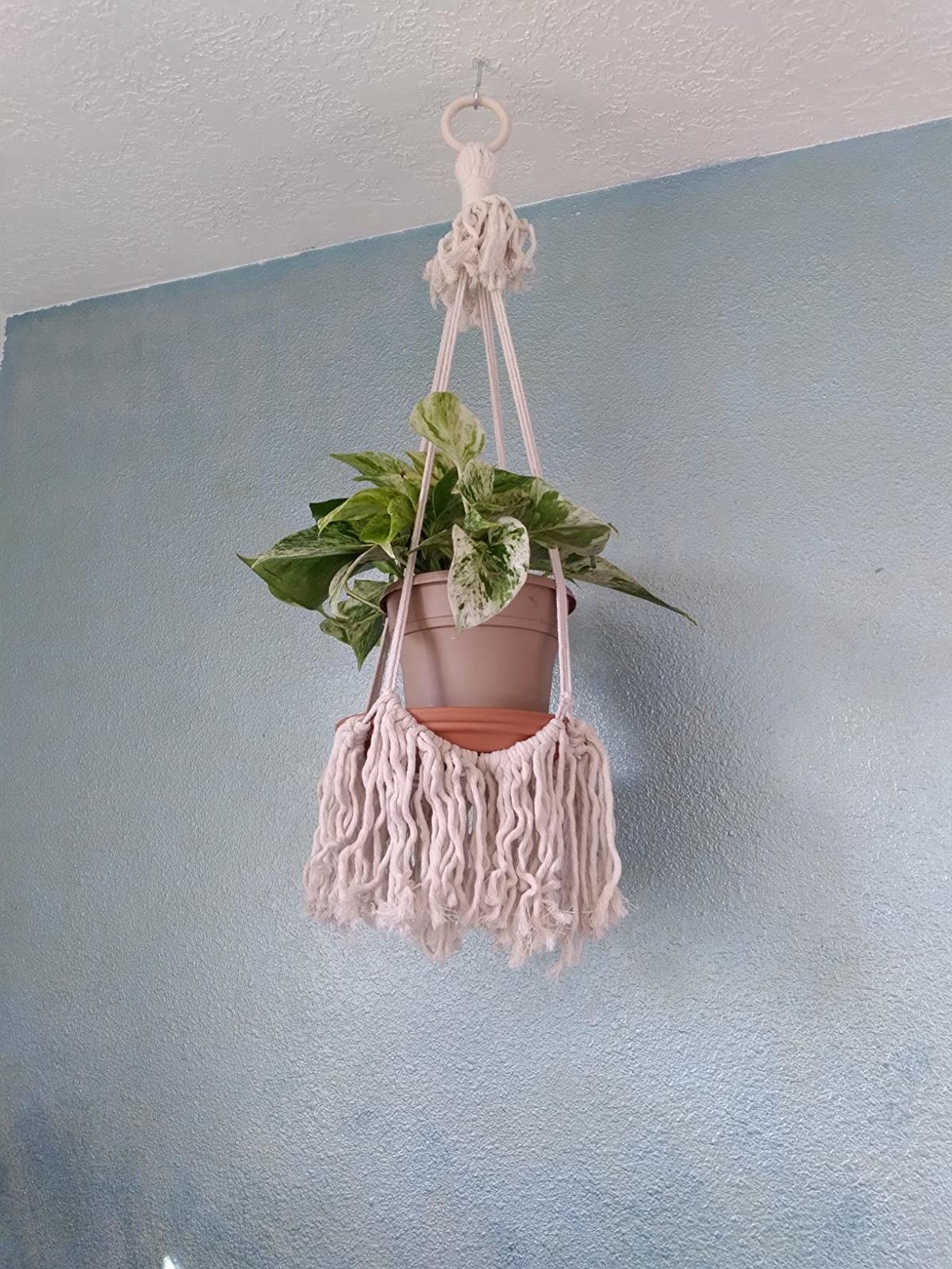 A reviewer's hanger with a fringe bottom and a plant on it