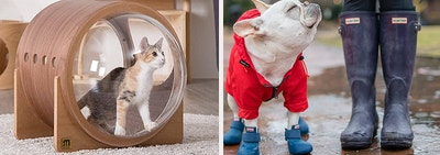 L: Wood cat bed with glass windows R: Frenchie wearing blue rain boots