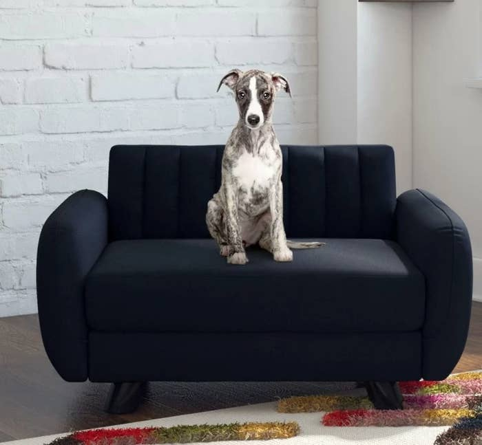 Dog on black pet sofa