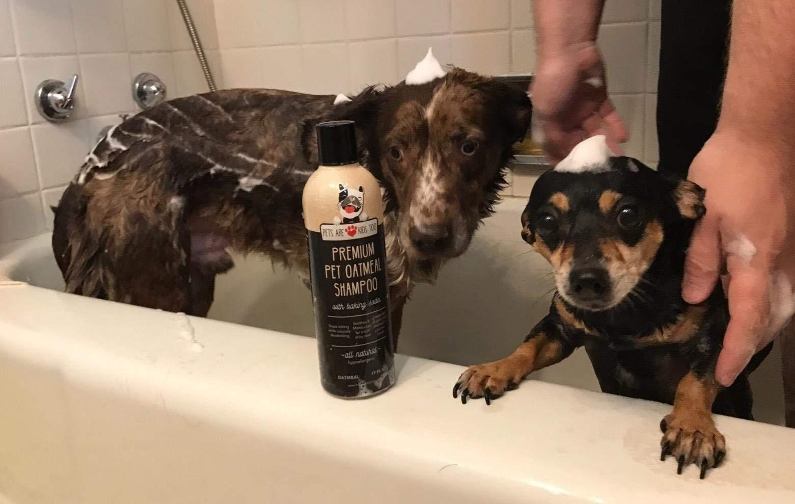 Reviewer's photo of their dogs in the bath using the shampoo and conditioner