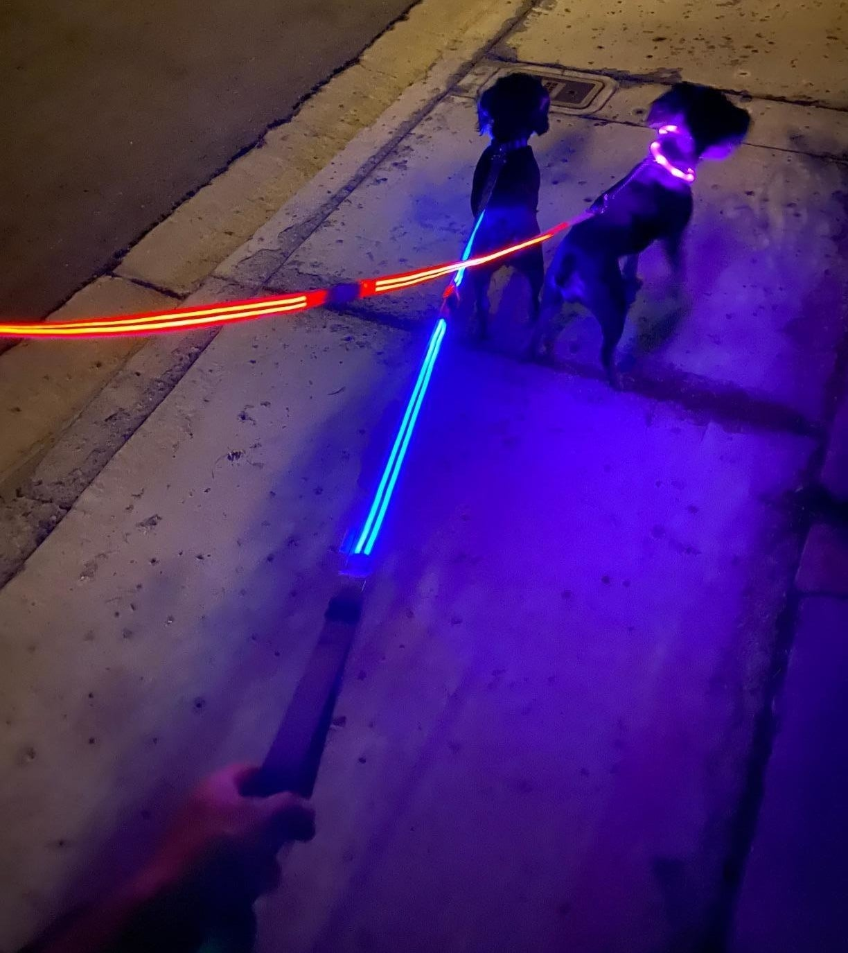 The leash, which has two lines of glowing material stretching from the handle to the collar