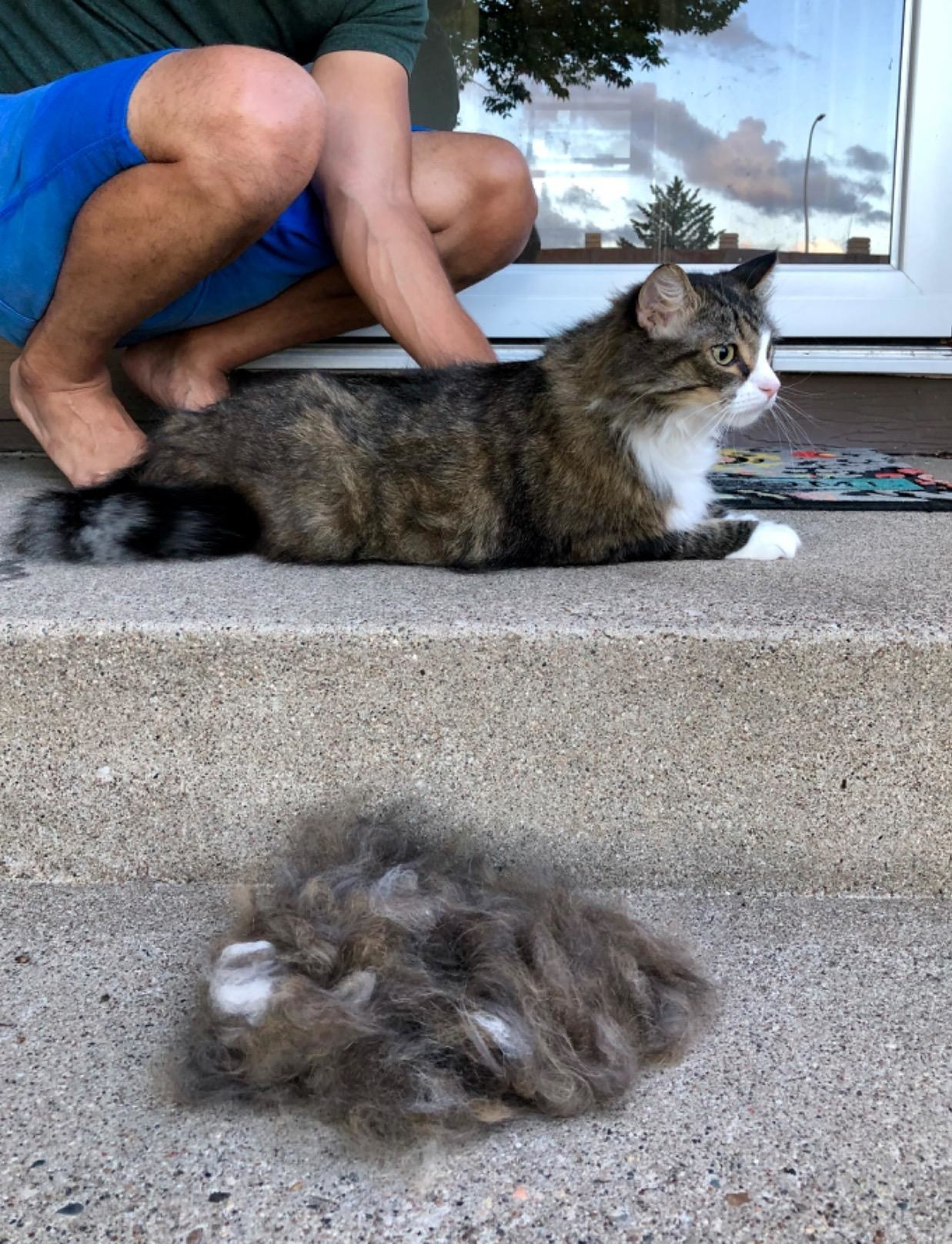 Cat with all the fur removed from their undercoat by the brush