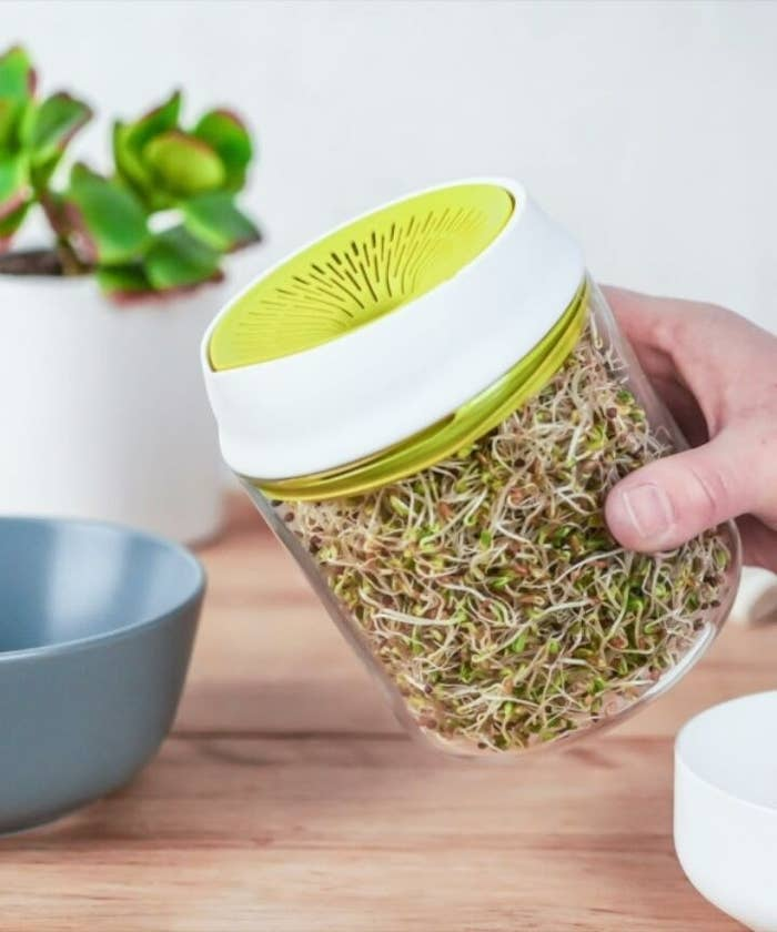 A person holding the sprouter that's filled with alfalfa sprouts