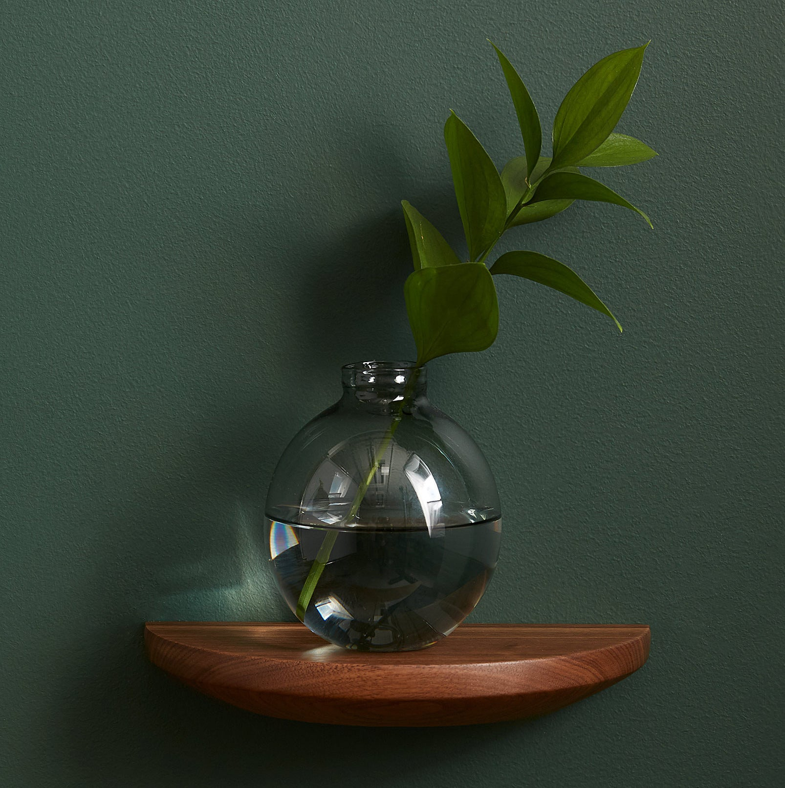 A round vase with a long leafy stem inside perched on the curved floating shelf