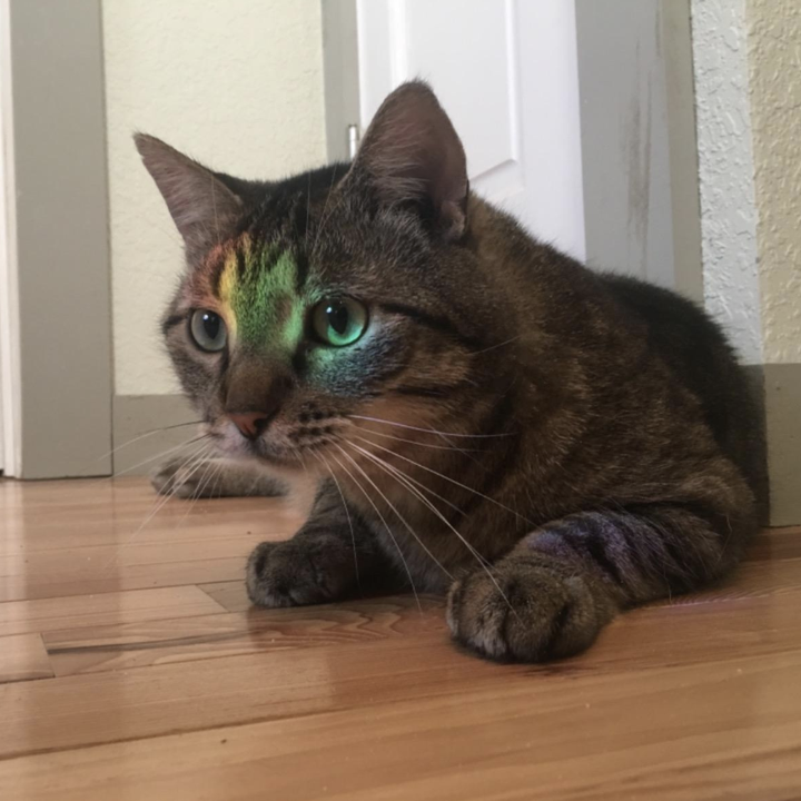 Reviewer image of a cat with a rainbow on it