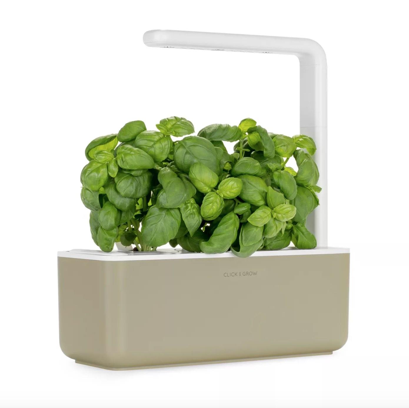 Beige smart garden with green plants