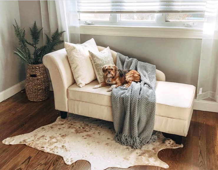 chaise lounge with dog sitting on it with the faux cowhide rug on the floor in front of it