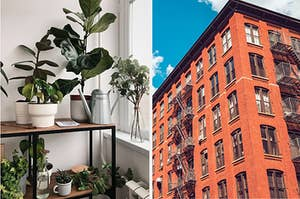 A shelf full of plants on the left and the exterior of a multi-story brooklyn apartment building on the right