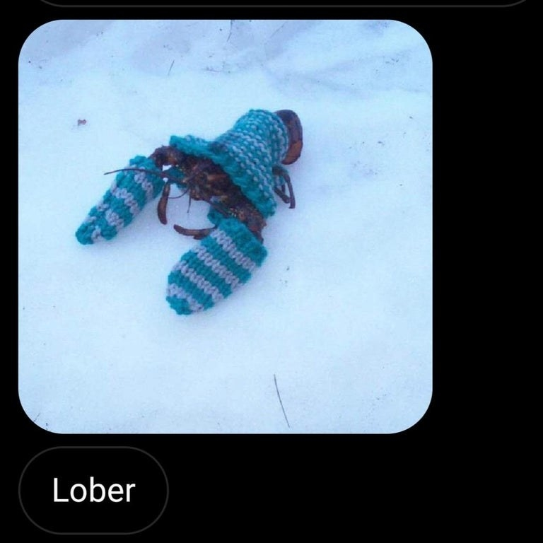 picture of a lobster reading lober