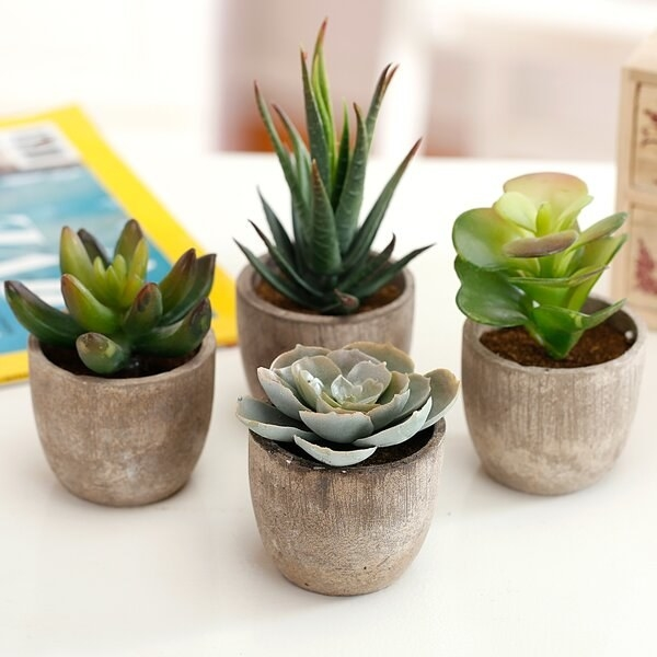 The set, which has four different types of faux succulents, in small, distressed-look pots