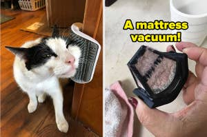 L: Cat rubbing its face on a wall-mounted brush R: Reviewer holding a mattress vacuum filter full of dust