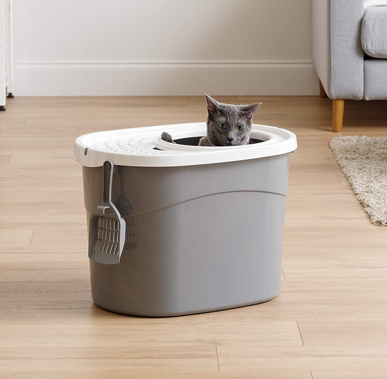 A cat inside of the litter box that has a hole in the top for entering, a ventilated lid, and a straining scoop hanging off the side