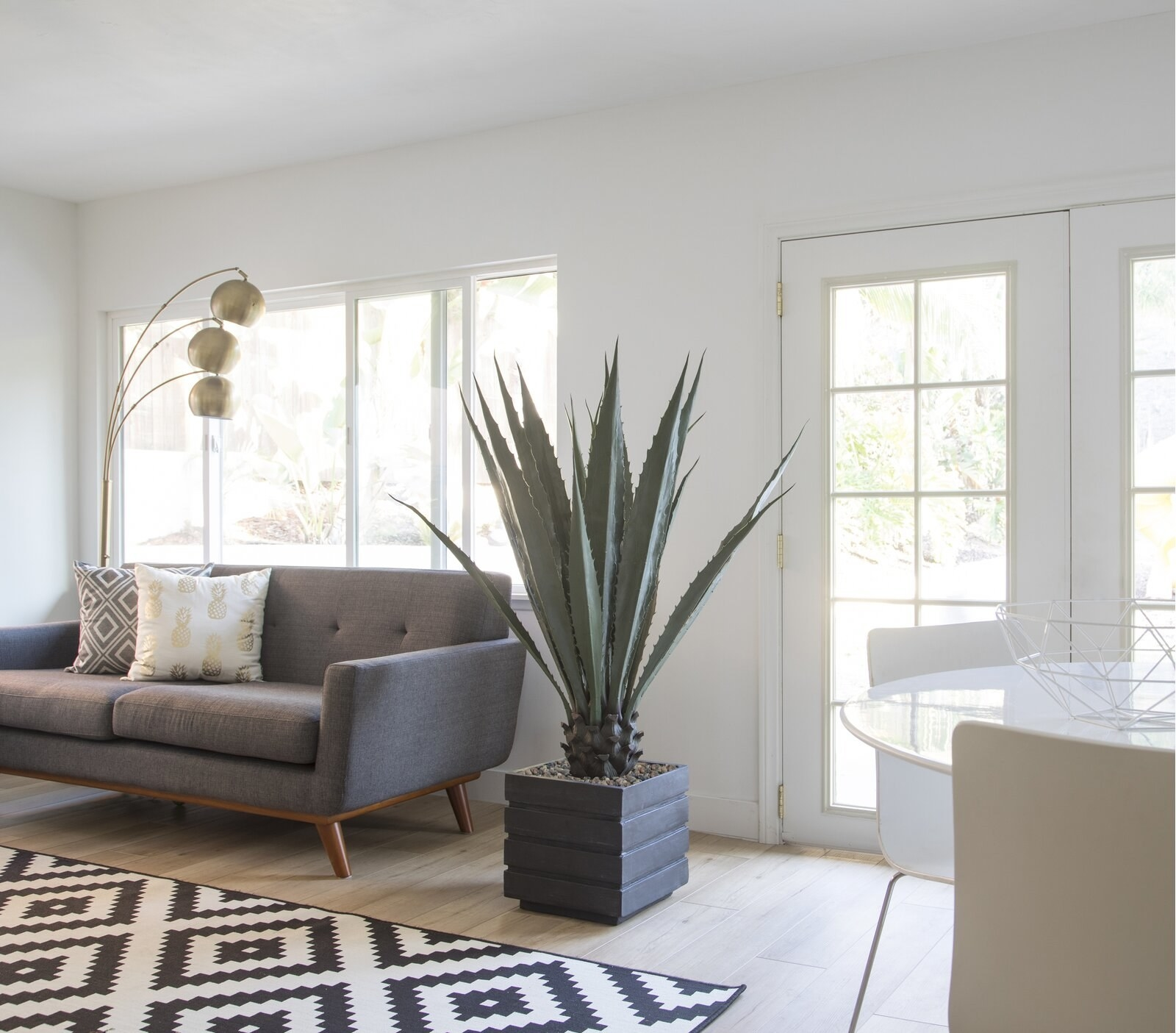Large agave plant in living room displayed in cube planter
