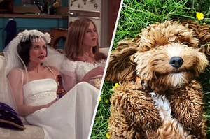 "Two characters from ""Friends"" are sitting in a wedding gown with a dog on his back on the right"