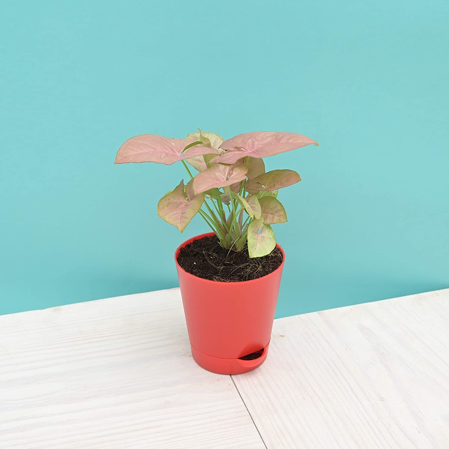 A red flower pot with a plant in it