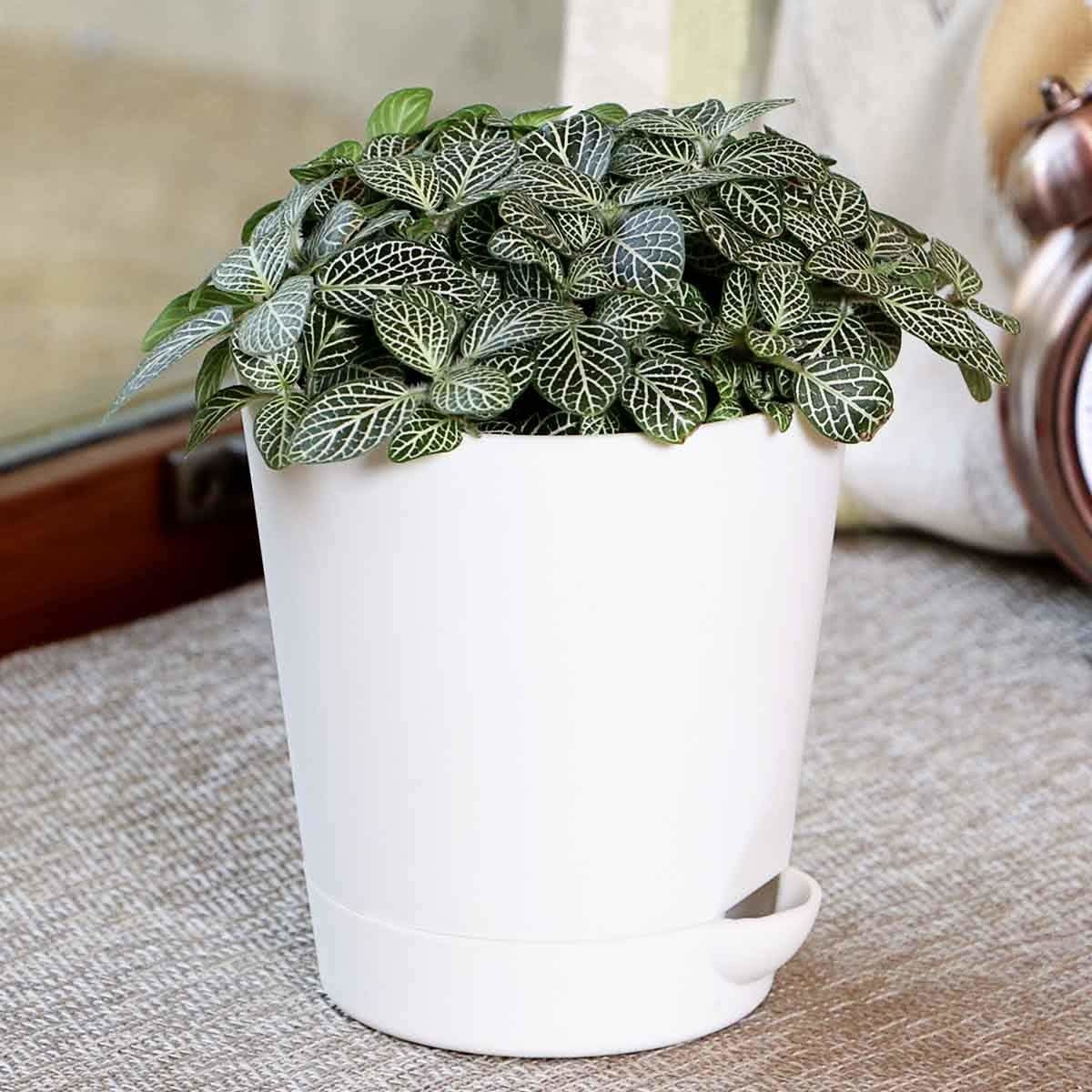 A plant in a white flower pot