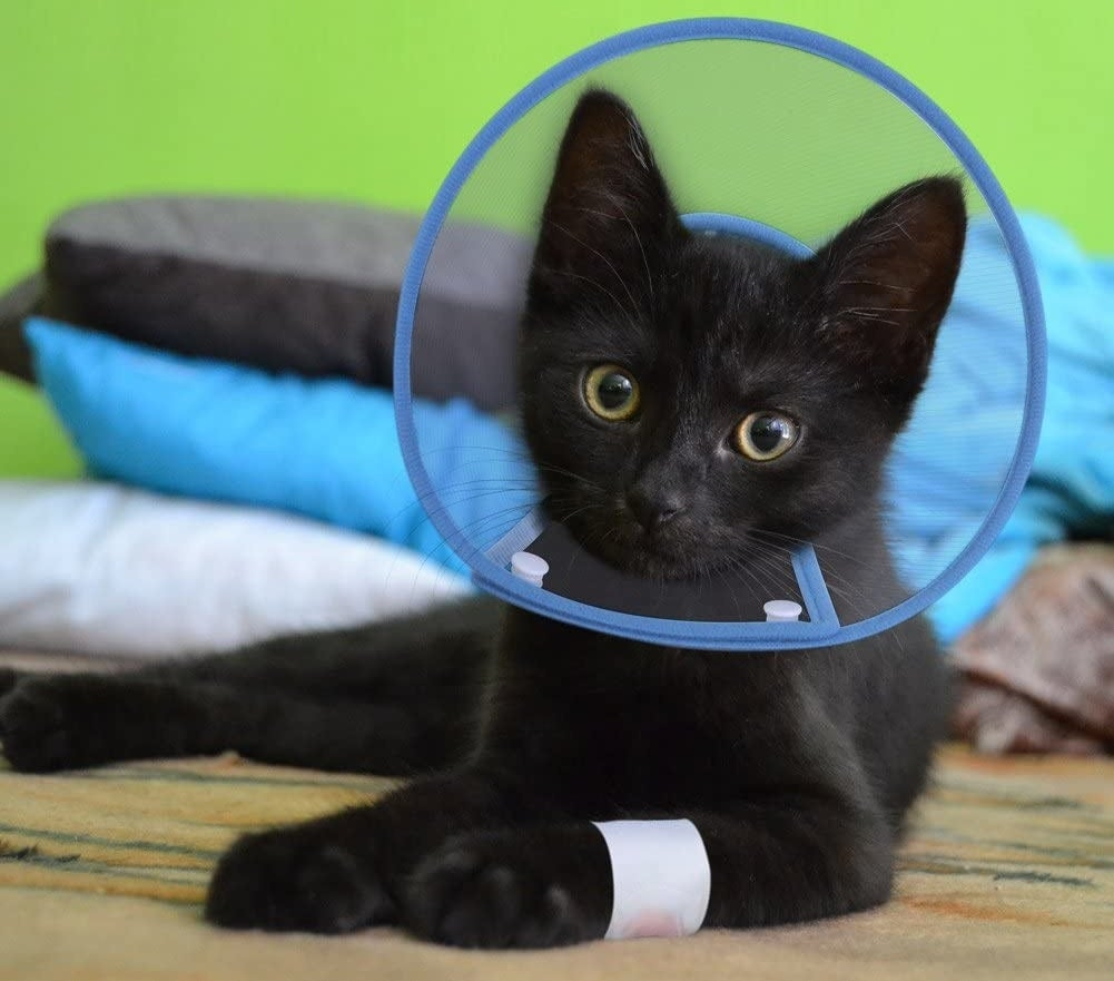 A cat with a bandaged arm wearing the cone