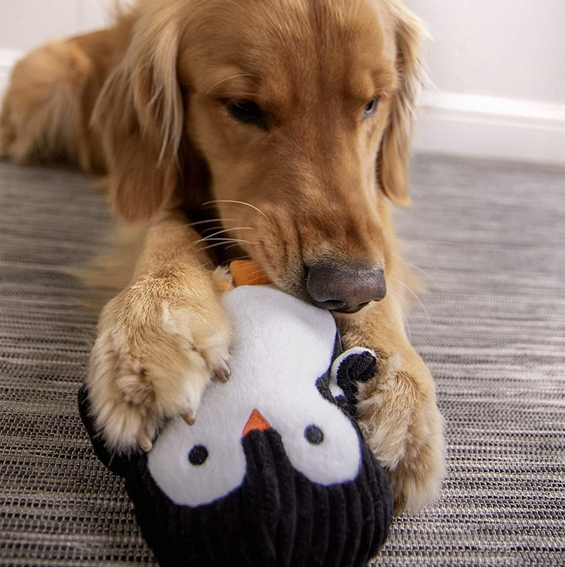 A dog with the penguin-shaped ultrasonic squeak toy