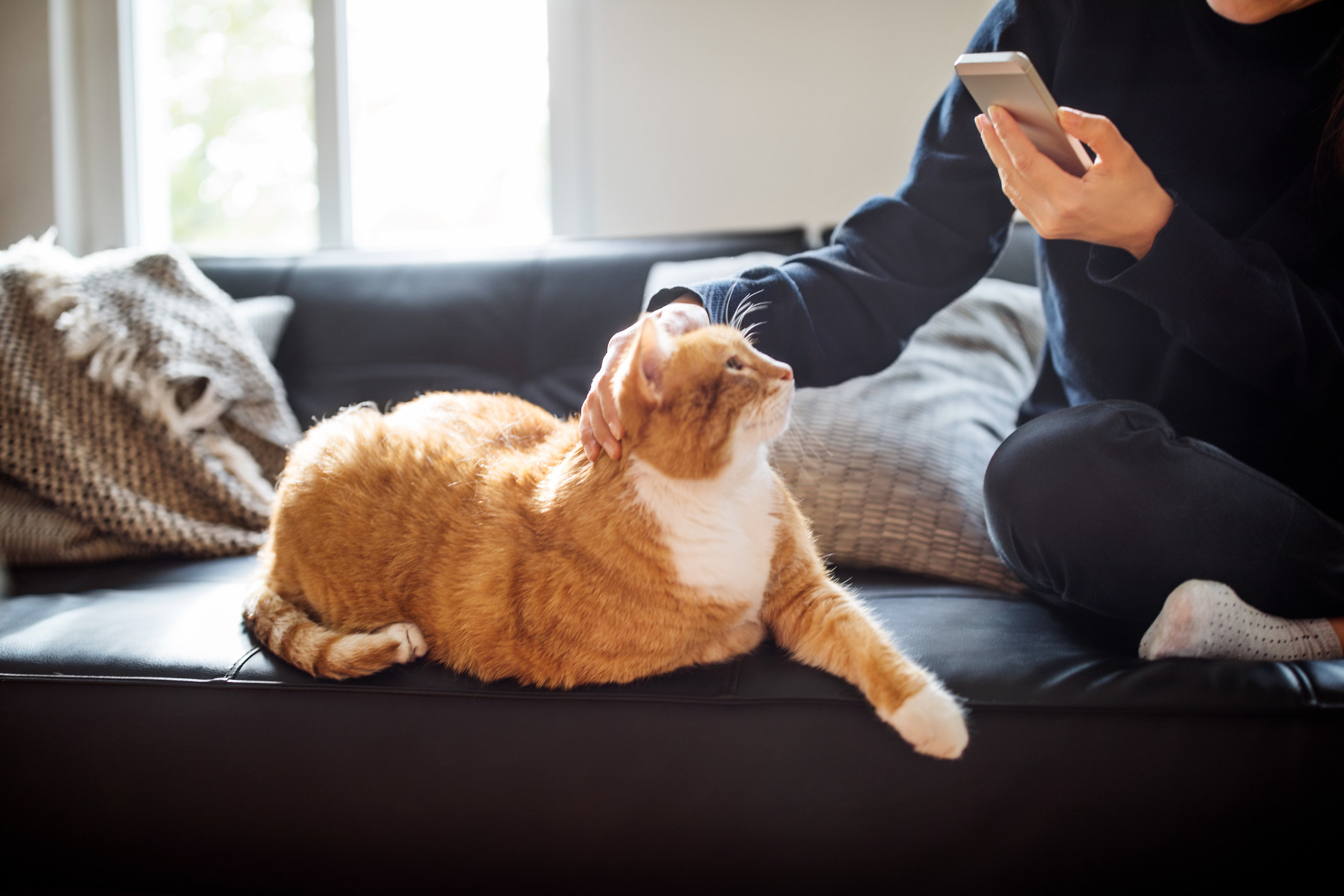 Woman sitting on the couch with a cat holding a cell phone.