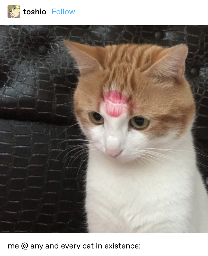 a cat with a lipstick kiss on its head