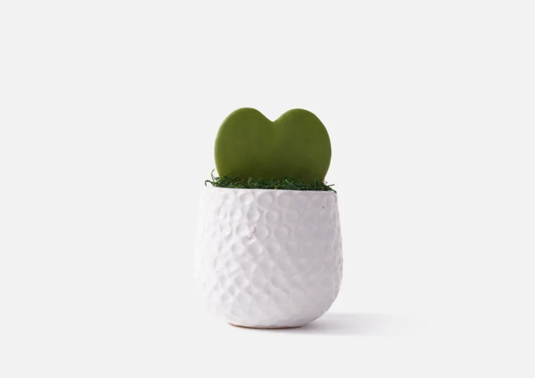 the heart-shaped succulent in a white vase
